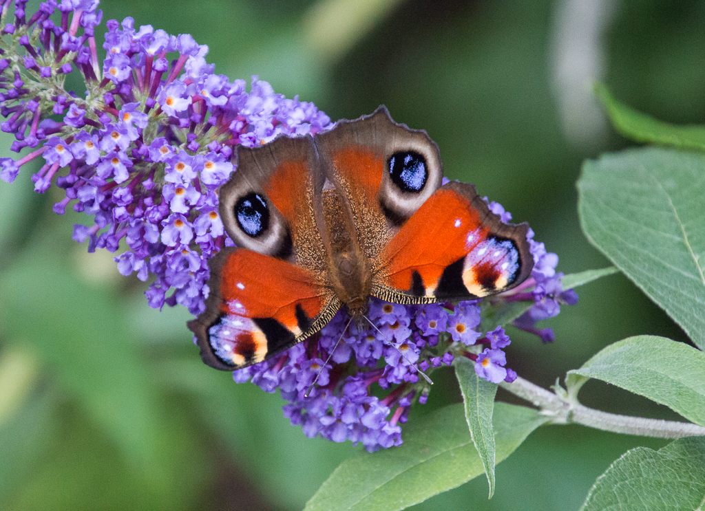 Lessons from Butterflies andBees