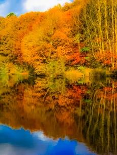 11th Nov 2012 020 (2)-3