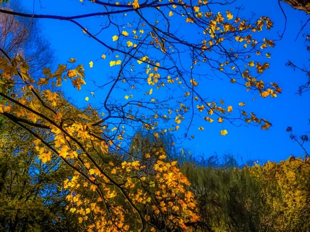Moss Valley 10th Nov 2012 091 (2)-3