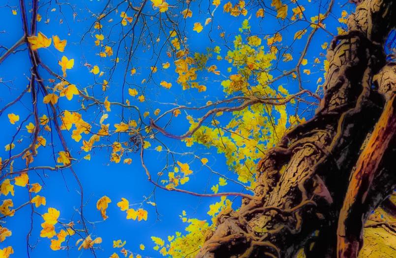 Moss Valley 10th Nov 2012 096 (2)-4-2